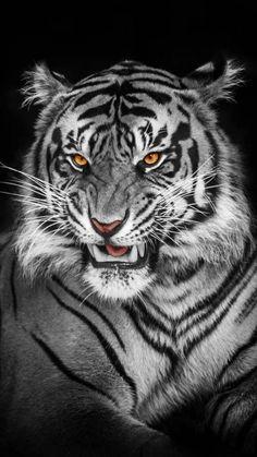 Bike Wallpaper, Movies Wallpaper, Cats Wallpaper, Animal Wallpaper, Iphone Wallpaper, Big Cats Art, Cat Art, Spotted Animals, Black Jaguar