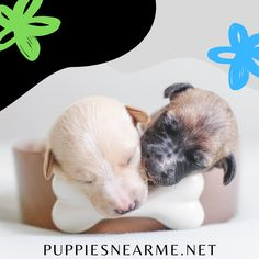 Happy New Year! Please feel free to list your 'Puppy for Sale' Ad as we welcome a fresh new year. Sell your puppy in good timing. No fees, Ad Free website #puppiesnearme #puppies #happynewyear #happynewyear2021 Puppies Near Me, Free Puppies, Puppies For Sale, Christmas Activities, Book Activities, Algorithm Design, Daisy Love, Free Website, This Is Us