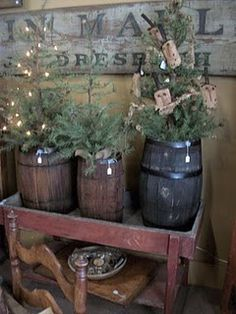 little trees in wooden barrels