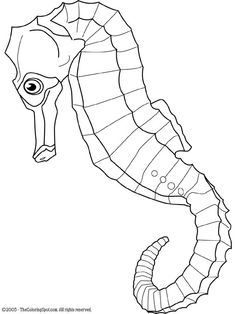 free fish coloring page fish animals coloring pages 16 printable coloring page denizat seahorse vector - Realistic Seahorse Coloring Pages
