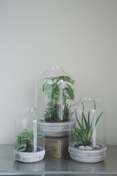 diy cement base terrariums for your #airplants