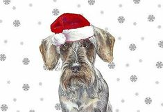 Christmas Wirehaired