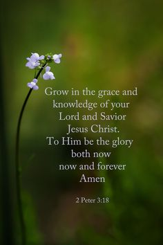 But grow in the grace and knowledge of our Lord and Savior Jesus Christ. To him be the glory both now and to the day of eternity. Biblical Quotes, Religious Quotes, Bible Verses Quotes, Bible Scriptures, Healing Scriptures, Scripture Cards, Life Quotes, Bible News, 2 Peter