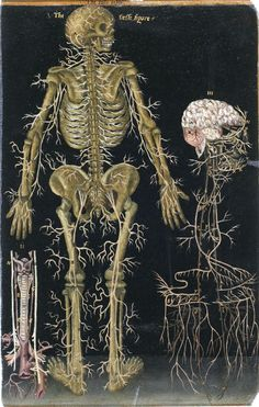 16th century anatomical table with a brain,  England