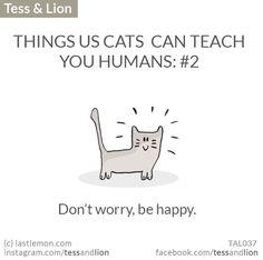 things us cats can teach you humans: I Love Cats, Cute Cats, Funny Cats, Crazy Cat Lady, Crazy Cats, Neko, Simons Cat, Kitten Photos, Gatos Cats