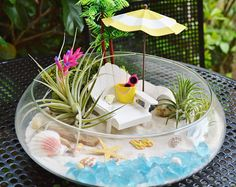 """Beach Terrarium Kit ~ Beach Umbrella and Beach Chair ~ 3 Air plants ~ 10"""" Glass Round Bowl ~ Margarita ~ Beach Decor ~ Beach ~ Gift"""
