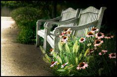 Chicago Botanic Gardens Cedar Garden, Garden Gates, Garden Art, Outdoor Spaces, Outdoor Chairs, Outdoor Decor, Chicago Botanic Garden, Most Beautiful Gardens, Outside Living