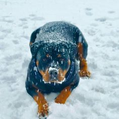 Yes please, throw another snowball. I triple dog dare ya!