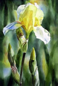 Shop for iris art from the world's greatest living artists. All iris artwork ships within 48 hours and includes a money-back guarantee. Choose your favorite iris designs and purchase them as wall art, home decor, phone cases, tote bags, and more! Watercolor Pictures, Watercolor And Ink, Watercolor Flowers, Watercolour Paintings, Art Floral, Iris Painting, Yellow Painting, Iris Art, Art Aquarelle