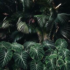 "blkpudding: "" Calm. #palmtrees #sunday #happyeaster #follage #plants #inspiration #green #hope #calm #palmsunday #spring """