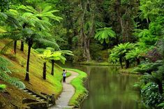 Jardim Terra Nostra - Ilha s. Azores Portugal, Paradise On Earth, Tropical Landscaping, Lisbon, Adventure Time, Places To See, Travel Inspiration, Around The Worlds, Country Roads