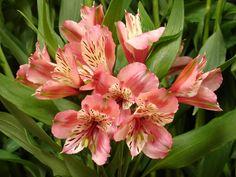 Flowers, Image, Plants, Royal Icing Flowers, Flower, Florals, Floral, Blossoms