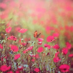 """Spring is nature's way of saying, """"Let's party!"""" by Chaulafanita [www.juliadavilalampe.com], via Flickr"""