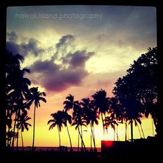 I'm Waiting - Vintage Beach Palm Trees - Fine Art Photo Print 4X4 - Tropical Sunset - Home Decor
