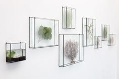 TERRA air plant / display boxes. Looks ethereal.