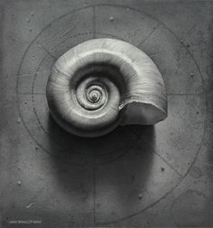 All Artwork - Copyright 2013 John Whalley Logarithmic Spiral, Shell Drawing, Spirals In Nature, Pencil Shading, Pencil Drawings, Fibonacci Spiral, Still Life Drawing, Still Life Photos, Food Drawing