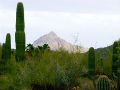 Beautiful Spacious, 4 BR/2BA, Gated Private Home in Catalina Foothills