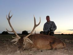 Free ranging red stag TGB Outfitters La Pampa, Argentina