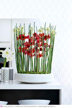 Afbeeldingsresultaat voor amaryllis in vaas