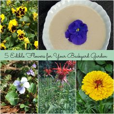 Edible Flowers for your Backyard Garden from @turningcockbac