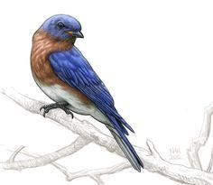 blue bird illustration - Google Search