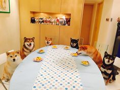 Doge dinner party! Much hungry, such sneak, very table manners, so yum, wow.
