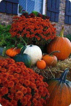 And I mean TONS of Halloween/Fall Decor ideas from the Thrifty Decor Chick. (I don't do the Halloween stuff, but the fall stuff is awesome! Thanksgiving Decorations, Halloween Decorations, Holiday Decor, Outdoor Decorations, Holiday Ideas, Autumn Ideas, Mums In Pumpkins, White Pumpkins, Fall Pumpkins