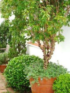 Um pomar em vasos - Jardim das Ideias STIHL