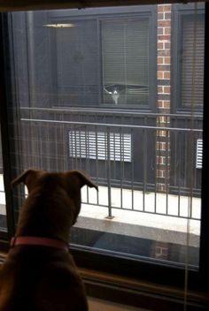 Tierische Nachbarn - Win Bild
