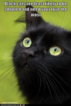 Of of my favorite kitties was a black maine coon. He was a great little lovebug.