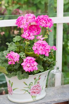 Flower Planters, Flower Pots, Container Plants, Container Gardening, Bougainvillea Tree, Pink Flowers, Beautiful Flowers, Bonsai Soil, Indoor Bonsai Tree