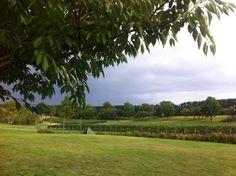 #10 NZ vineyards and wine!