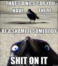 Have Some Laughs With These Fresh Animal Memes Haben Sie etwas Lachen mit diesen frischen Tier Memen Animal Jokes, Funny Animal Memes, Funny Animal Pictures, Funny Images, Funny Dogs, Funny Animals, Funniest Pictures, Cat Memes, Animal Fails
