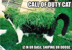 Call of Duty Cat iz in ur base, sniping ur doodz