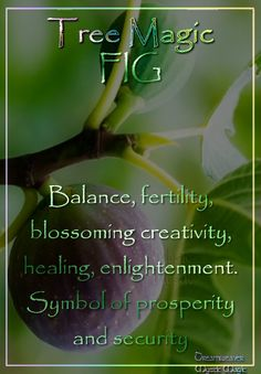 FIG Balance, fertility, blossoming creativity, healing, enlightenment. Symbol of prosperity and security. by Dreamweaver #Shamanism #Paganism