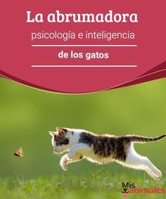 La abrumadora psicología e inteligencia de los gatos Los gatos son una de las especies más deseadas como mascotas. Sin embargo, pocos dueños saben mucho sobre la psicología e inteligencia de los gatos.