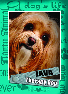 #Therapy Dog, #Trading Card