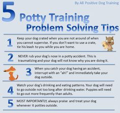 Potty Training Tips! #dogtraining #puppies http://www.allpositivedogtraining.com