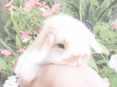 Find images and videos about aesthetic, icon and soft on We Heart It - the app to get lost in what you love. Nature Aesthetic, Aesthetic Photo, Aesthetic Pictures, Aesthetic Pastel, Aesthetic Bedroom, Cute Baby Bunnies, Cute Babies, Cute Little Animals, Baby Animals