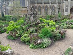 the stumpery at arundel castle - Google Search