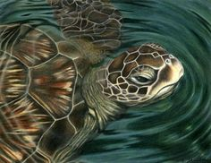 """ocean colored pencil drawing   Sea Turtle"""" was completed in colored pencil on premium drawing paper ..."""