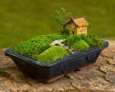 Moss garden in a bonsai pot