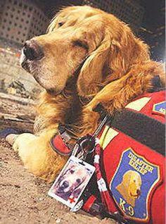 Hero Dogs of 9/11 Premieres Tonight on Animal Planet