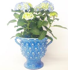 ND Dolfi cachepot available from Bonechi Imports http://www.bonechiimports.com/index.php?route=product/category&path=94
