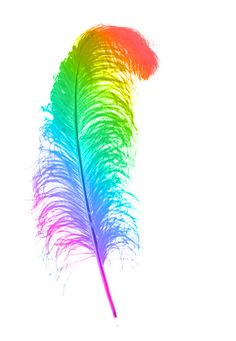 Rainbow Beautiful Feather. ❤