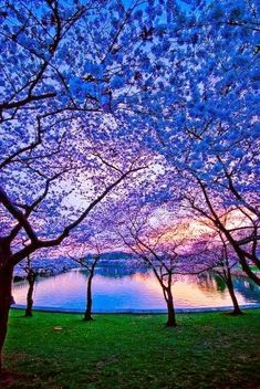 Blue Dusk, Charlottesville, Virginia My father loved the color blue in nature because its so rare.