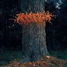 Flying Swarms of Everyday Objects by Thomas Jackson I love environmental art. Land Art, Art Environnemental, Instalation Art, Outdoor Art, Environmental Art, Everyday Objects, Art Plastique, Tree Art, Mandala Art
