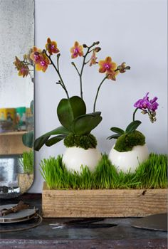 easter egg orchids. so cute