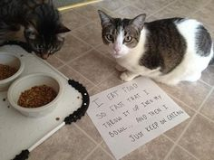 An epic gallery of cat shaming pictures that prove these cats are the naughtiest in the world. A hilarious cat shaming picture gallery. Cat Shaming, Public Shaming, Funny Cats And Dogs, Bad Cats, Funny Pets, Funny Kitties, Crazy Cat Lady, Crazy Cats, I Love Cats