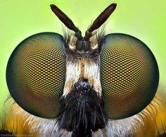 Bug-Eyed---Insects-Macro-Photographs-by-Ireneusz-Irass-Waledzik-(5)